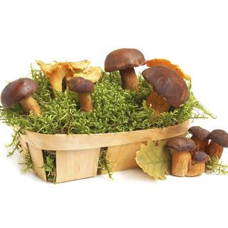 Sadzonki grzybów 1+1 GRATIS
