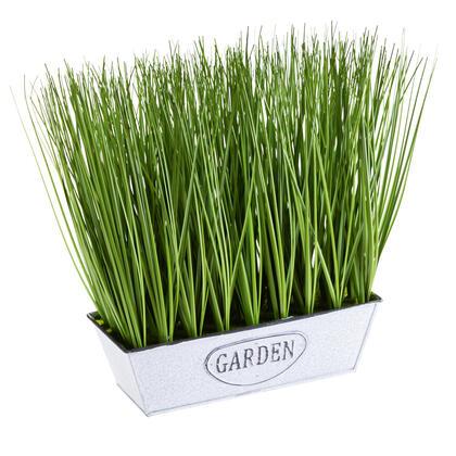 Ozdobna trawa w doniczce